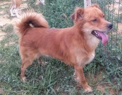 Cani da adottare ANPA Alba Langhe Roero